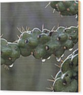 Cholla Cactus In The Rain Wood Print