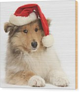 Christmas Collie Pup Wood Print