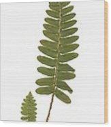 Christmas Fern Wood Print