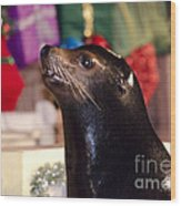 Christmas Sea Lion Wood Print