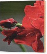 Chromatic Gladiola Wood Print by Deborah  Crew-Johnson
