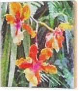 Chromaticorchids Wood Print by Anthony Caruso