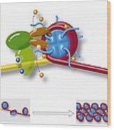 Chromatin Structure, Diagram Wood Print