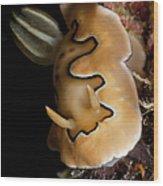 Chromodoris Coi Sea Slug Nudibranch Wood Print