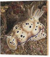Chromodoris Kunei Nudibranch Carrying Wood Print