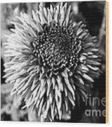 Chrysanthemum In Monochrome Wood Print