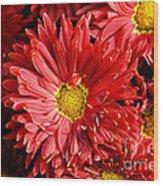 Chrysanthemums  Wood Print