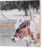 Cibolo Ranch Steer Wood Print