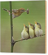 Cici Red Bird Wood Print