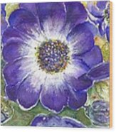 Cineraria Of South Africa  Wood Print