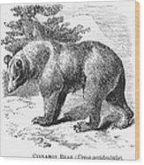 Cinnamon Bear Wood Print