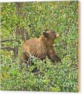 Cinnamon Black Bear Limited Edition Wood Print