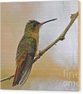 Cinnamon Hummingbird Resting. Wood Print