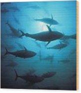 Circling Bluefin Tuna Wood Print