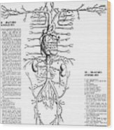 Circulatory System, 16th Century Wood Print