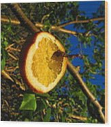 Citrus In The Tree Wood Print