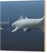 Cladoselache Sharks Wood Print