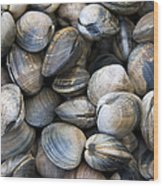 Clam Shell Background Wood Print