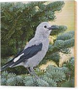 Clarks Nutcracker Nucifraga Columbiana Wood Print