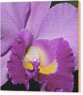 Classic Purple Orchid Wood Print