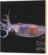 Clawed Armhook Squid Wood Print