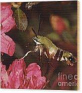 Clear Wing Hummingbird Moth 1 Wood Print