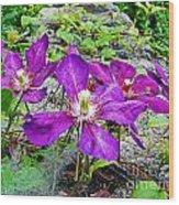Clematis Abby Aldrich Rockefeller Garden Wood Print
