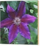 Clematis 'barbara Jackman' Flower Wood Print