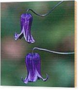 Clematis Integrifolia Rooguchi 3 Wood Print