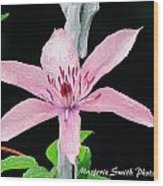 Clematis Lavender On Black Wood Print