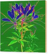 Cleome Gone Abstract Wood Print