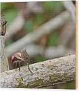 Climbing Crabs Wood Print