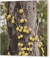 Climbing Plant On A Tree Trunk Wood Print