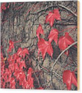 Clinging Wood Print by Laurie Search