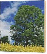 Clonmel, County Tipperary, Ireland Wood Print