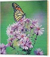 Close-up Of A Monarch Butterfly (danaus Plexippus ) On A Perennial Aster Wood Print