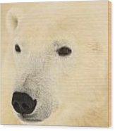 Close Up Of A Polar Bear, Churchill Wood Print