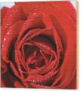 Close-up Of A Red Rose Wood Print