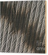 Close-up Of A Turkey Feather Wood Print