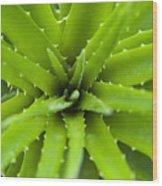 Close-up Of Aloe Plant, Atlantic Forest, Ilha Do Mel, Parana, Brazil Wood Print by Chris Hendrickson