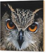 Close Up Of An African Eagle Owl Wood Print