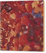 Close-up Of Autumn Leaves Wood Print