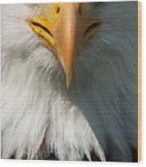 Close Up Of Bald Eagle Wood Print