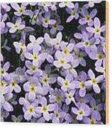 Close-up Of Bluet Flowers Houstonia Wood Print