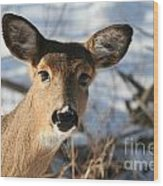 Close Up Of Deer In A Snowy Wooded Setting Wood Print by Christopher Purcell