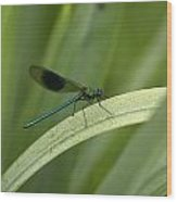 Close-up Of Dragonfly Perched On Leaf Wood Print