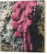 Close-up Of Live Sponge Wood Print