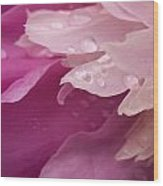Close-up Of Pink Flower Wood Print