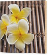 Close-up Of Pink Plumeria Flower Wood Print