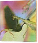 Close-up Of Praying Mantis Wood Print